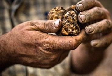 A base de truffe